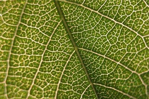 Eating for Vein Health | Austin Vein Specialists | (512) 339-9100