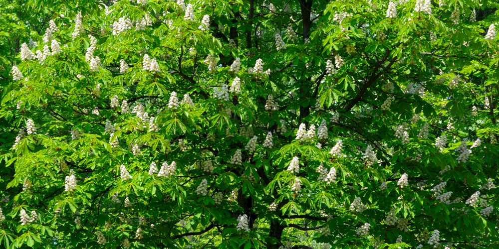 horse chestnut medication vein supplement austin texas